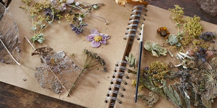 Master the art of flower pressing with this simple how-to guide.