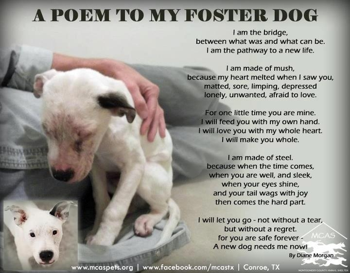 A Poem to my Foster Dog #dogrescue