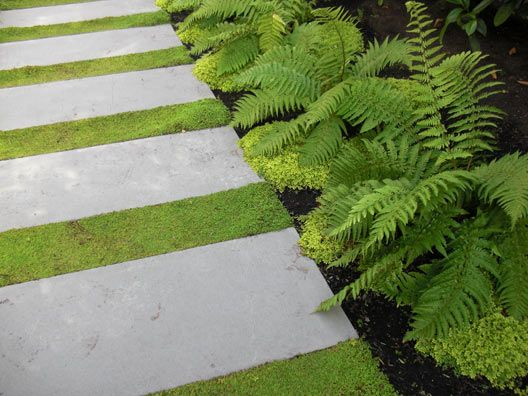Pavers in planting in rear garden - Source  Allworth Design : Landscape Architecture