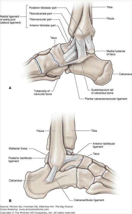 leg joints