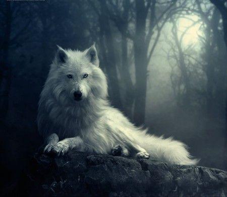 Google Image Result for http://primawan.info/wp-content/uploads/2012/03/dark-forest-wolf.jpg