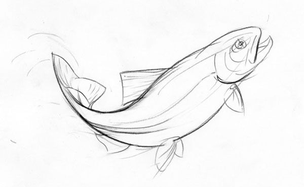 Drawing of a jumping trout by Artyom Yefimov, via Behance
