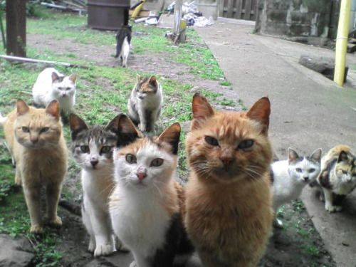 Welcome to the neighborhood. In order to live here you must feed us. Every day. Twice a day.