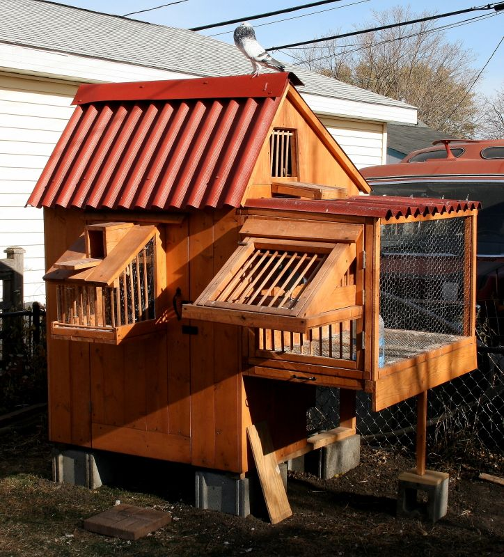 Small racing pigeon lofts related keywords small racing for Pigeon coop ideas