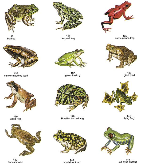 frog illustrations - dover