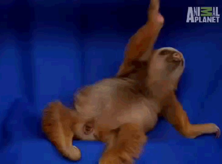"""The British army was like """"NOOOOO, WE'VE LOOOOOST."""" 
