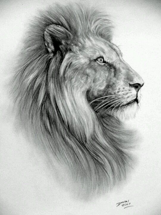 Lion Sketch PENCIL DRAWIN ALINA Pinterest Stitches