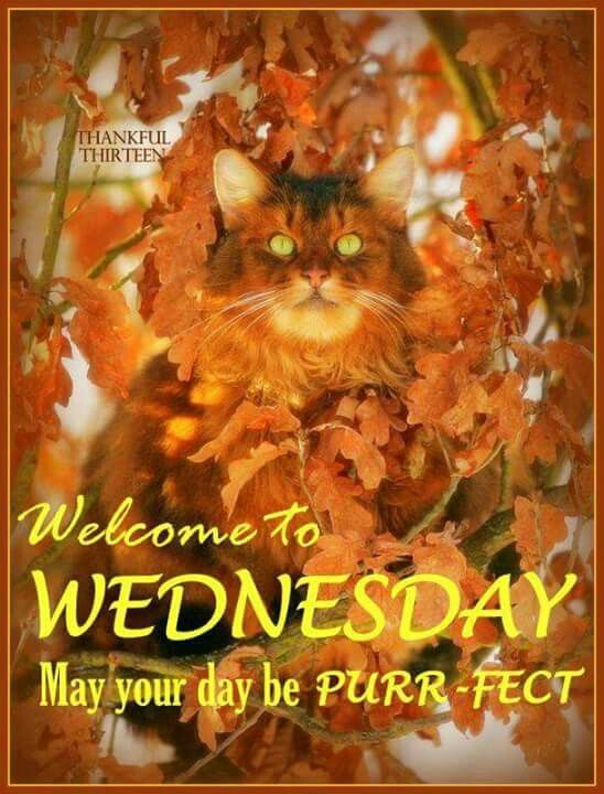 Image result for autumn wednesday