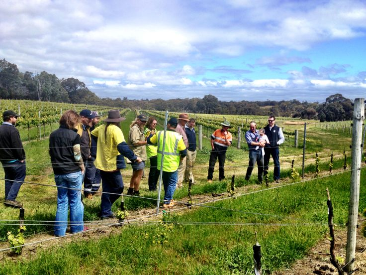 Talking some local vineyard managers through our Rhymney vineyard after we recently completed an extensive grafting project.