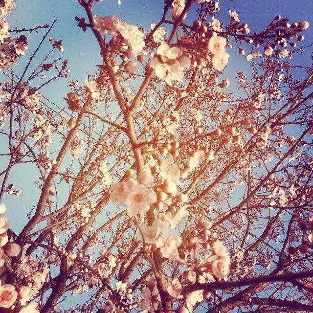 #flower #power #flowerpower #nature #instanature #instamoment #garden #beauty #white #spring #instaspring #novellaorchidea #novella #orchidea #raccontierotici #racconti #ebook #ricardo #tronconi #eroticnovel #home #light #amazing #trees #sun#skyporn