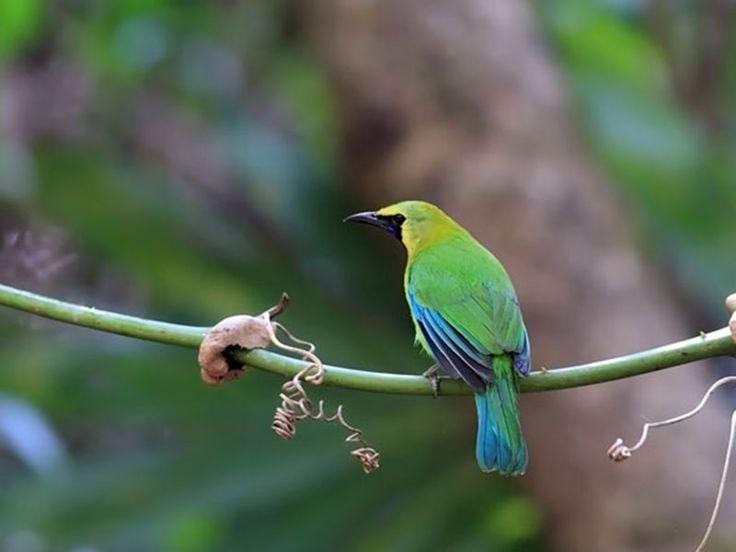 Semarsot and Tamor Pingala Wildlife Sanctuary - Chhattisgarh