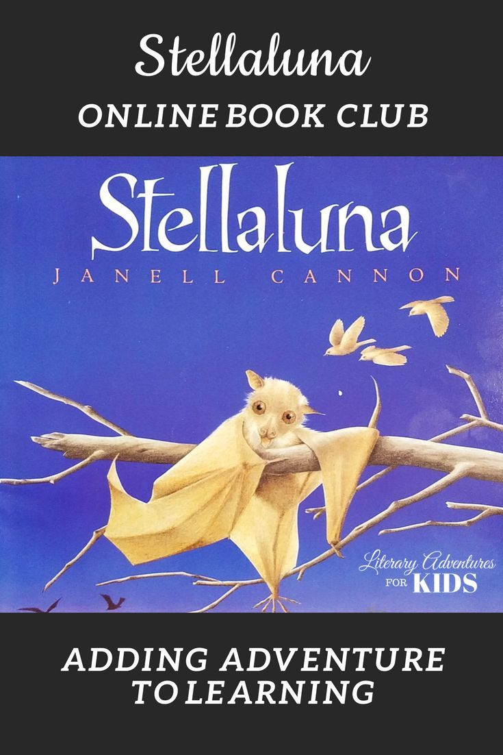 """In the course, Stellaluna Online Book Club, we will read the book Stellaluna by Janell Cannon, go on rabbit trails, add a little magic dust, and go on outside adventures with this picture book. We will find ways to learn while experiencing parts of the book.    And, we will add a little magic dust.    At the conclusion of the story, we will have a """"party school"""" celebrating the squirrels and their bird friends. #bookclub #homeschool via @hidethechocolate"""