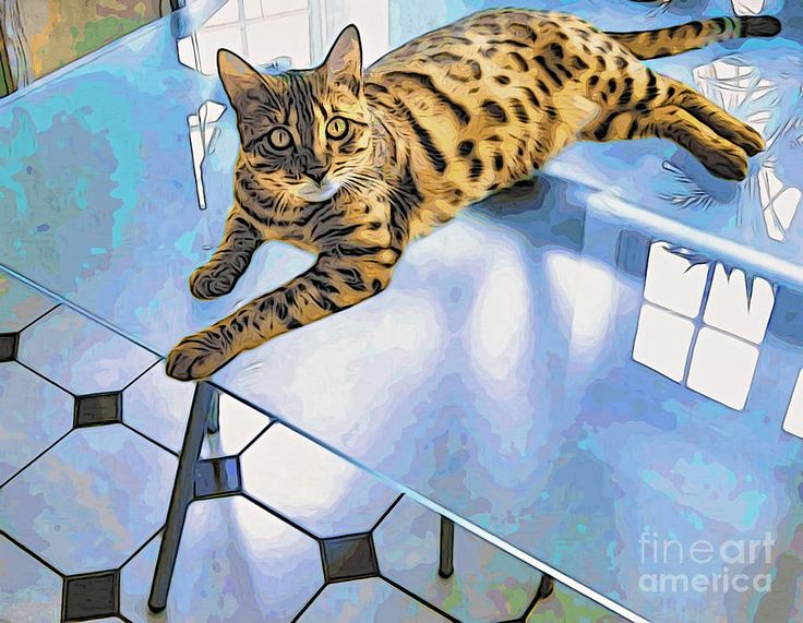 Photograph - Bengal Tiger Cat On Table by Eleni Mac Synodinos