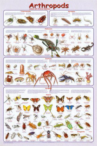 arthropods-insects-educational-science-chart-poster.jpg (325×488)