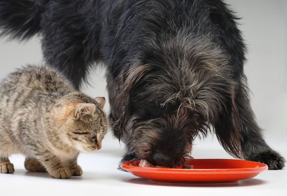 5 Tips to Manage Diabetes in Dogs, Diabetes in Cats   petMD
