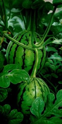 Luscious Watermelons