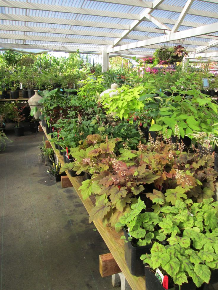 Back Is Feeling Better And Soon The Plants On This Table Will Be Picked Up From Tsuki Nursery In Olympia My Yard