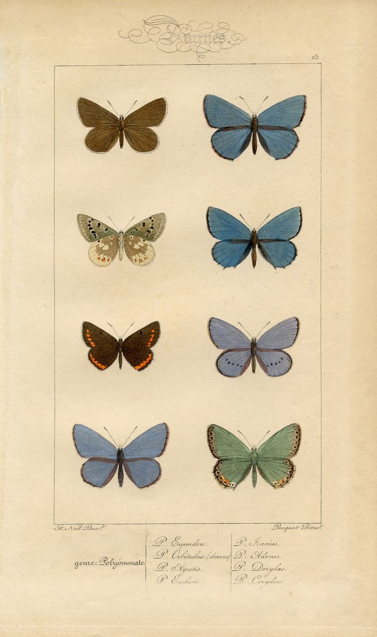 Butterfly Printable - Vintage Wall Decor