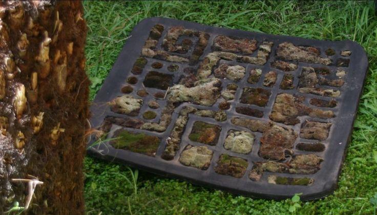 Moss Bath Mat : Moss Carpet Bathroom Design Ideas