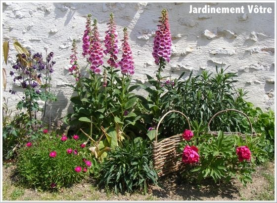 - Jardinement Vôtre - des oeillets, une pivoine, au second plan à gauche: des ancolies pourpres; plus à droite: des digitales