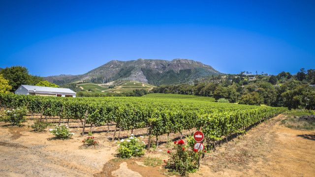 South African Wine Tastings: A Vine Romance
