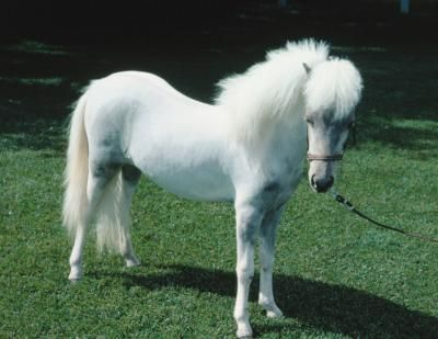 Best MINIATURE HORSES Images On Pinterest Mini Horses - Adorable miniature horses provide those in need with love and care