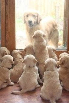 """* * MOM DOG: """" Uh.... I'll just stay out heres a little longer if yoo all don't mind."""""""