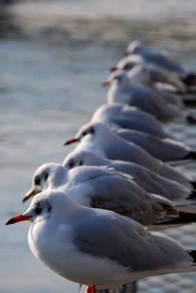#4 this picture represent as implied line because all the birds look at the same direction.