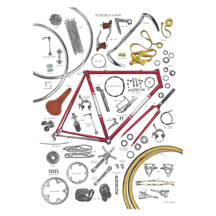 Anatomy of a Bicycle Print at Amara