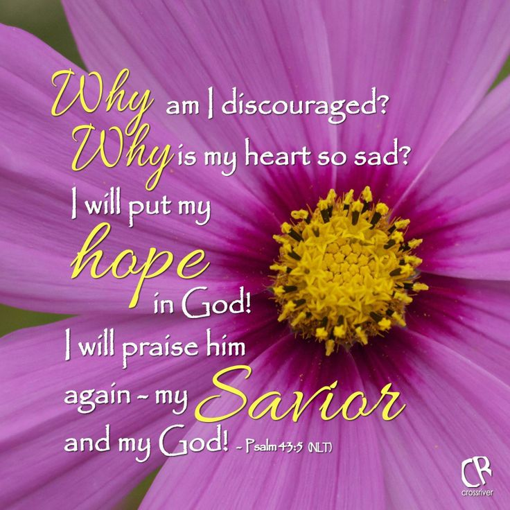 Why am I discouraged? Why is my heart so sad? I will put my hope in God! I will praise him again - my Savior and my God! - Psalm 43:5 #NLT #Bible verse   CrossRiverMedia.com
