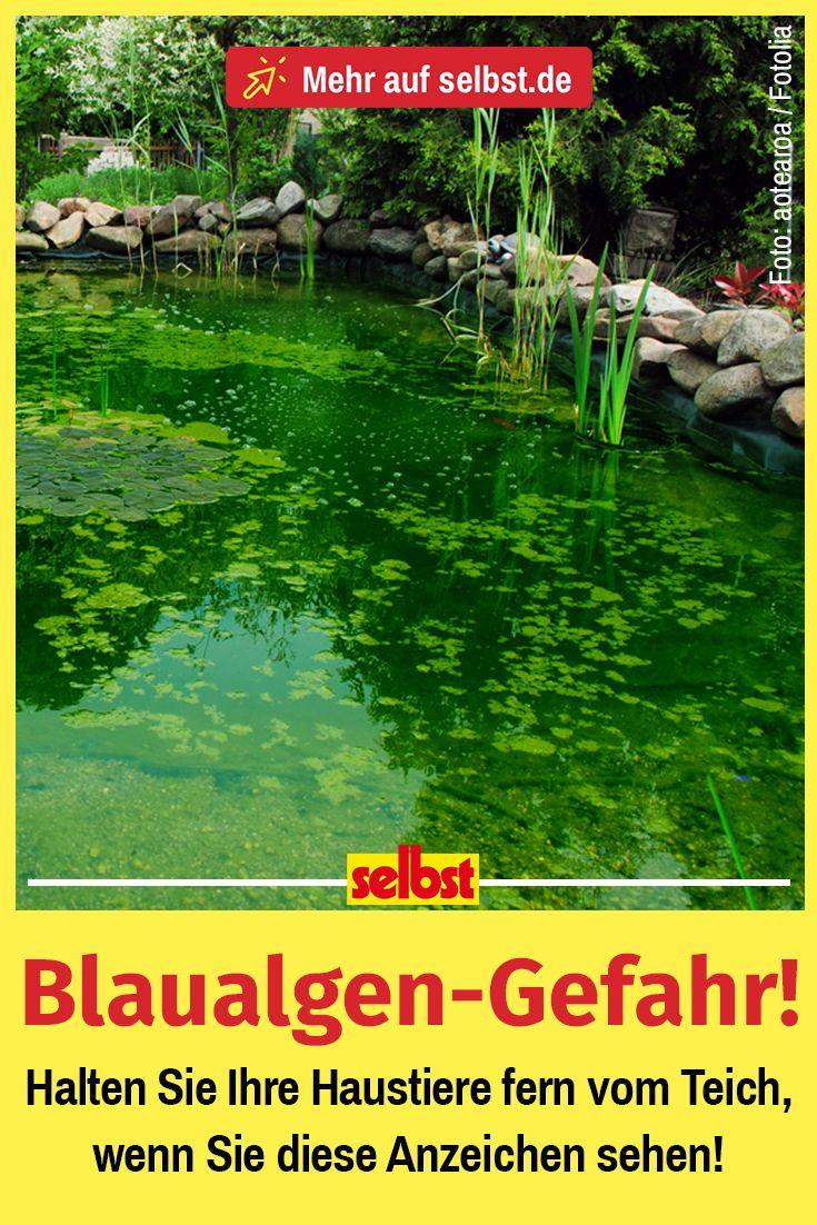 Blaualgen Hund Selbst De Blaualge Algen Hunde