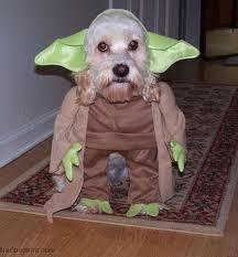 Смешные костюмы для собак - MyPage