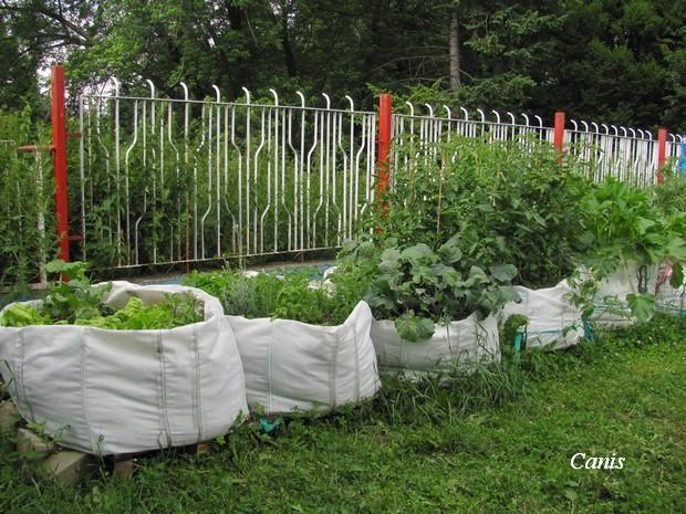 Pěstování zeleniny v pytli   Canis Lupus blog