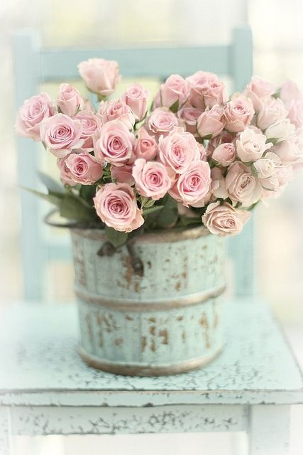 Gorgeous roses in a cute bucket...