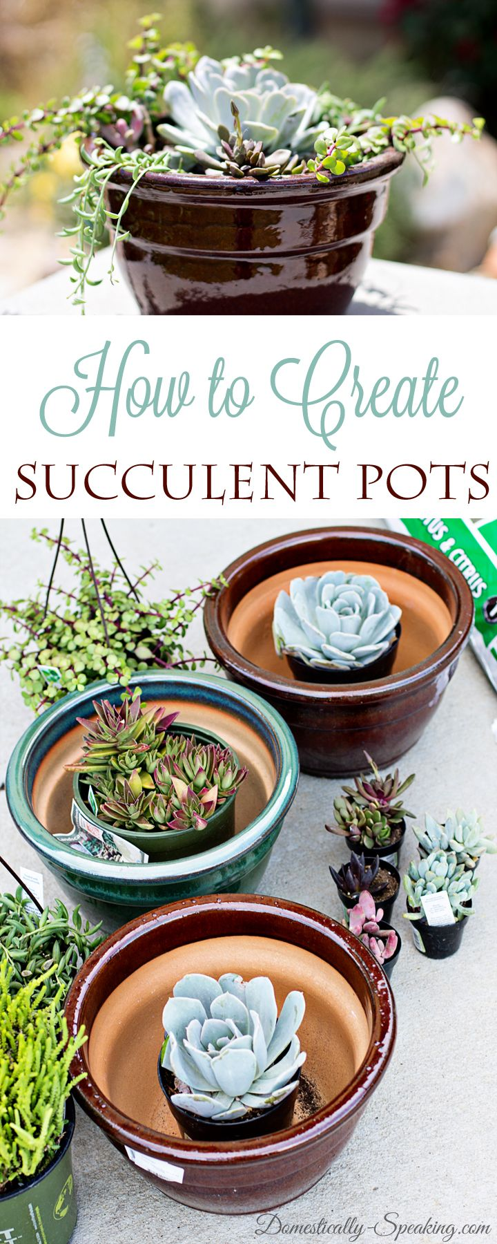 Succulents are great drought tolerant plants that are easy to maintain.