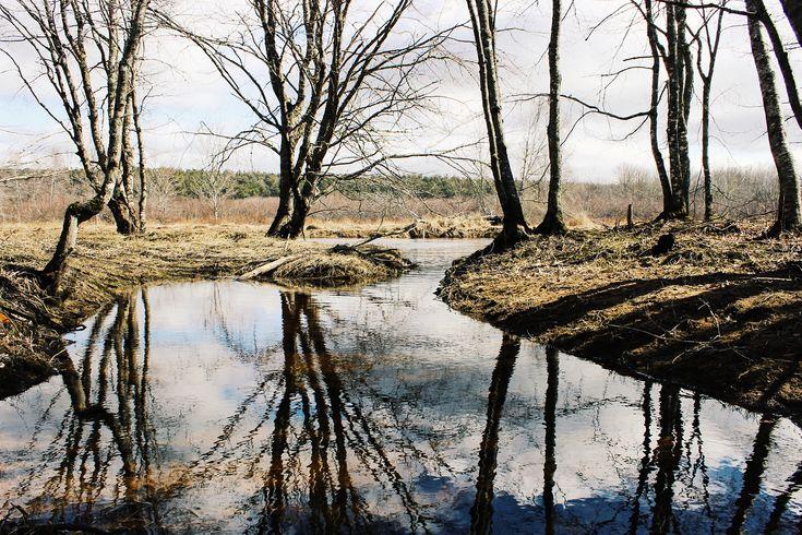 Pinehurst, NS • Marshy marshy marshy