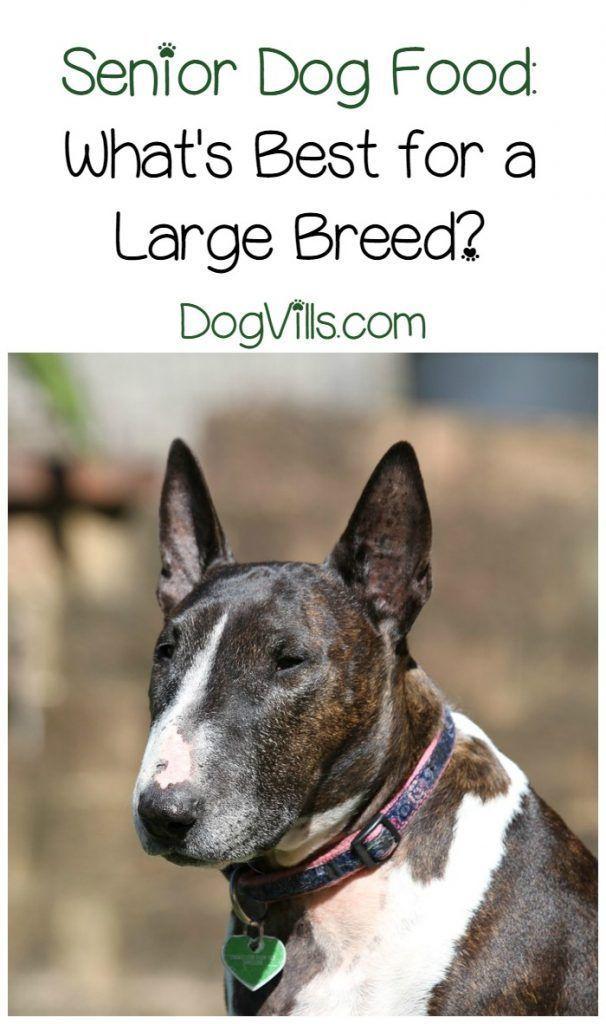 Best Senior Dog Food For Large Breeds Best Senior Dog Food