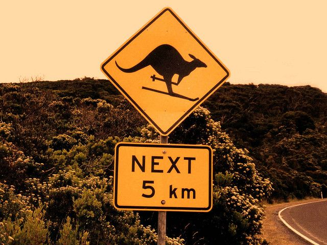 Great Ocean Road. Is that kangaroo skiing? !  Not so sure about the skiing, but they love to surf the waves late afternoon.