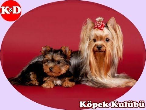 SÜS KÖPEKLERİ 0532 343 8041 - Köpek Kulübü