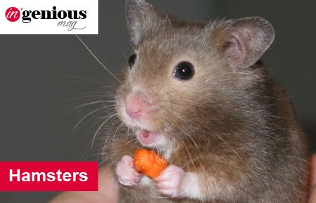 Les Hamsters