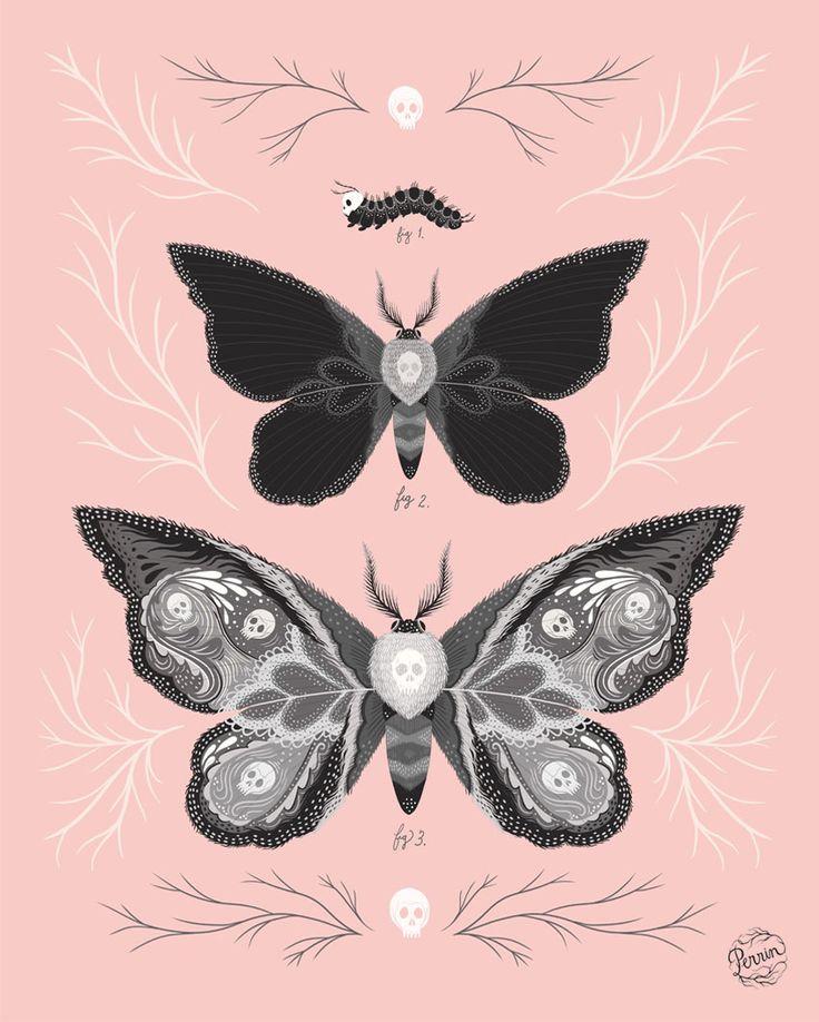 Nice Moths by Perrin