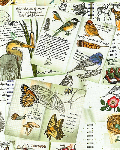 Nature's ealk - field notes sketches, white. Nature, journal, sketchbook, notebook, dairy, words and images, drawing.