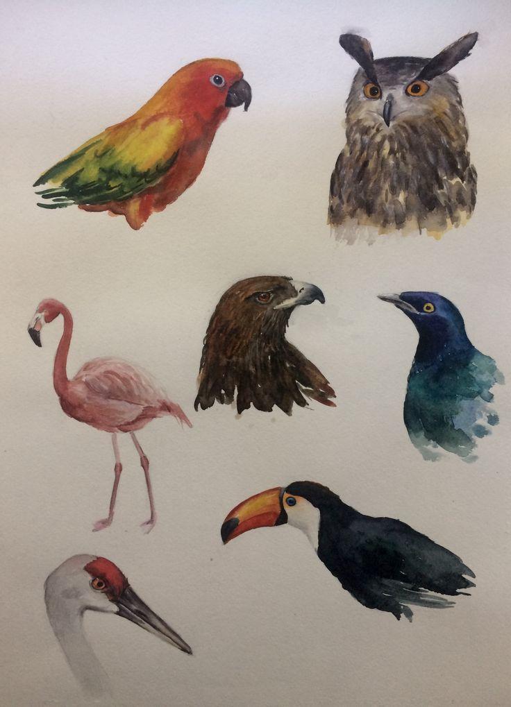 Outline birds. Watercolor .