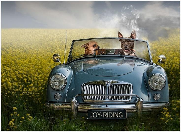 x: Photos Manipulation, Day Trips, Joy Riding, Joyriding, Jeannett Oerleman, Digital Photography, Retrato-Port Digital, Coats, Animal