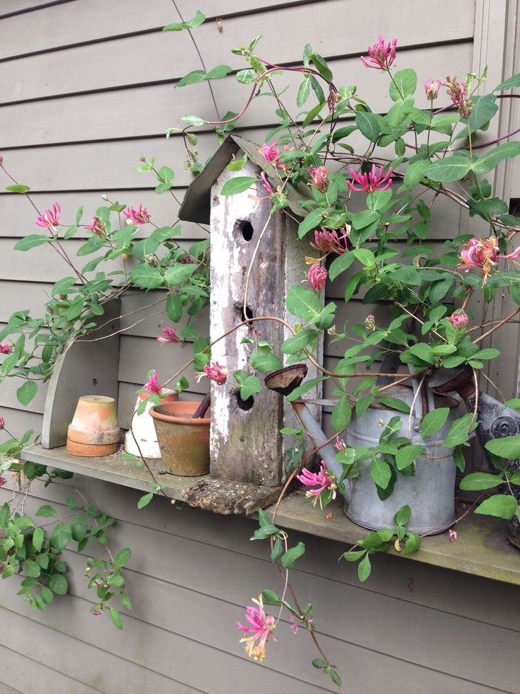 add plants to the birdhouse shelf on the side of the garage..