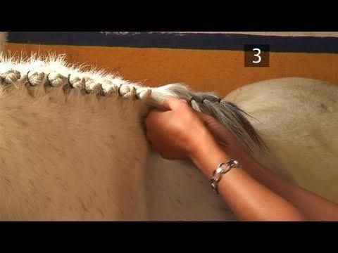 A trança é o principal meio de manter a crina e a cauda do cavalo bem conservadas e protegidas do meio externo, dando um toque especial ao cavalo.