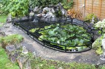 The 25 Best Pond Covers Ideas On Pinterest Fish Pond Gardens Koi Fish Pond And Koi Ponds