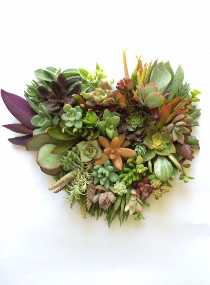 1000 ideas about succulent cuttings on pinterest succulents replant and cuttings. Black Bedroom Furniture Sets. Home Design Ideas