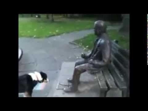 Heykeli Gerçek Zanneden Köpek!!