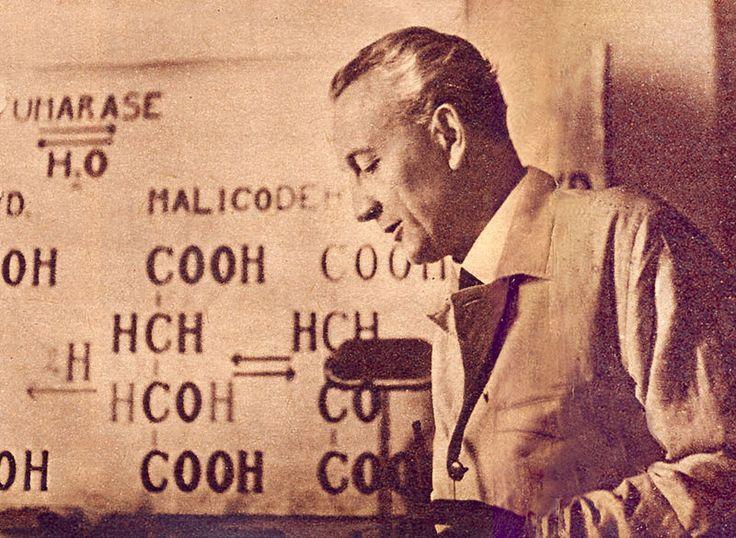 """Szentgyorgyi Albert es a c vitamin keplete. 1937-ben kapta meg a Nobel-díjat """"…a biológiai égésfolyamatok, különösképpen a C-vitamin és a fumársavkatalízis szerepének terén tett felfedezéseiért"""" indoklással."""